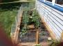Four Week Garden
