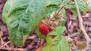 First Raspberry!